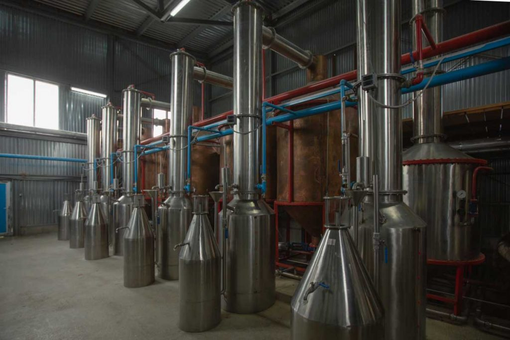 production of rose oil