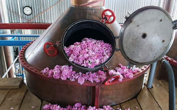 How We Produce Rose Essential Oil